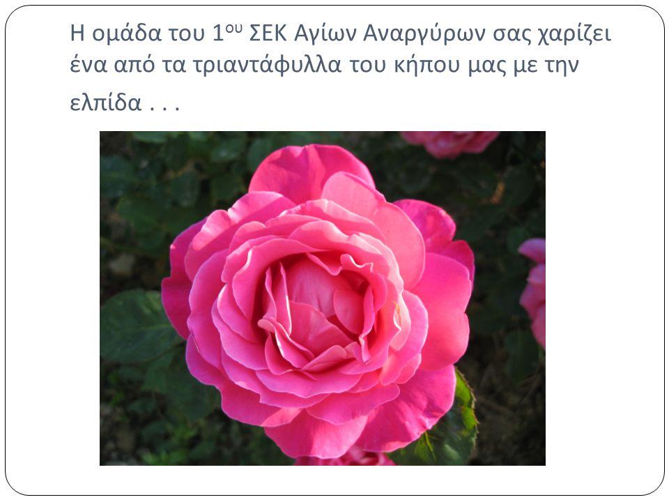Η ομάδα του 1ου ΣΕΚ Αγίων Αναργύρων σας χαρίζει ένα από τα τριαντάφυλλα του κήπου μας με την ελπίδα .