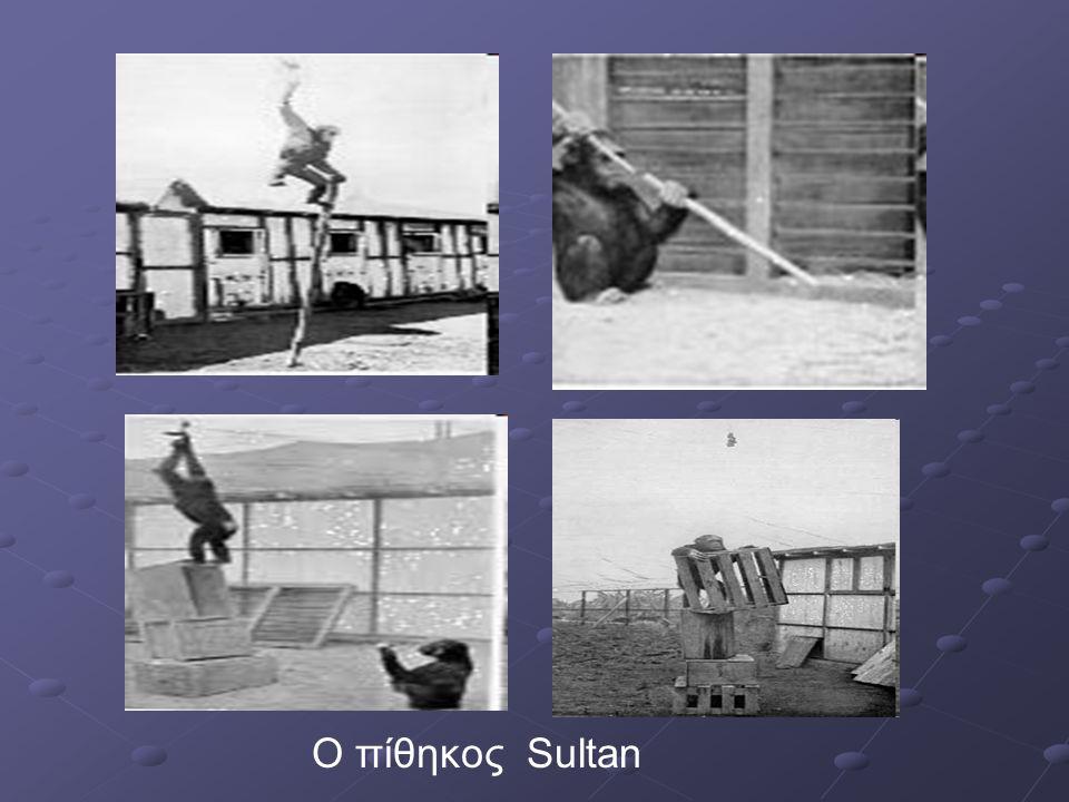 Ο πίθηκος Sultan