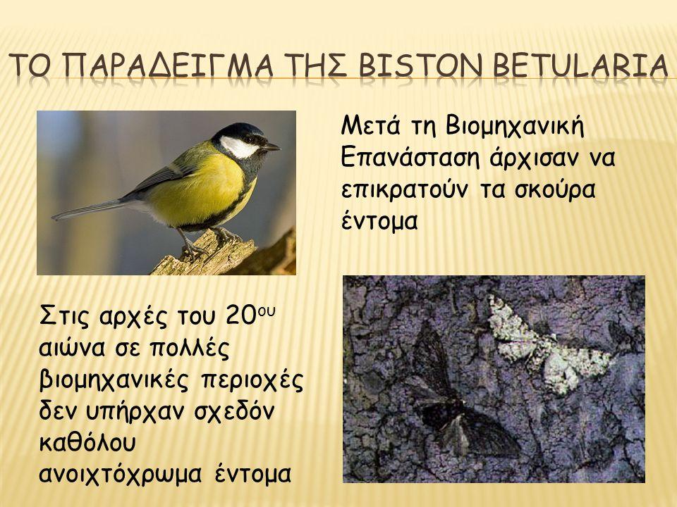 Το παραδειγμα της biston betularia