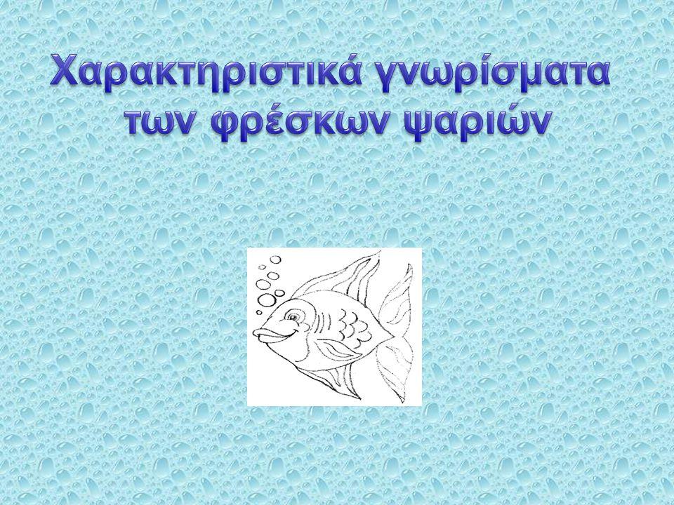 Χαρακτηριστικά γνωρίσματα των φρέσκων ψαριών