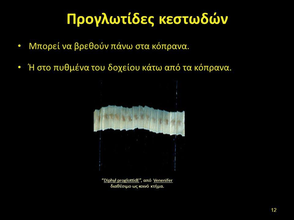 Οξύουροι + Ασκαρίδα Threadworm , από Cartoffel διαθέσιμο ως κοινό κτήμα.