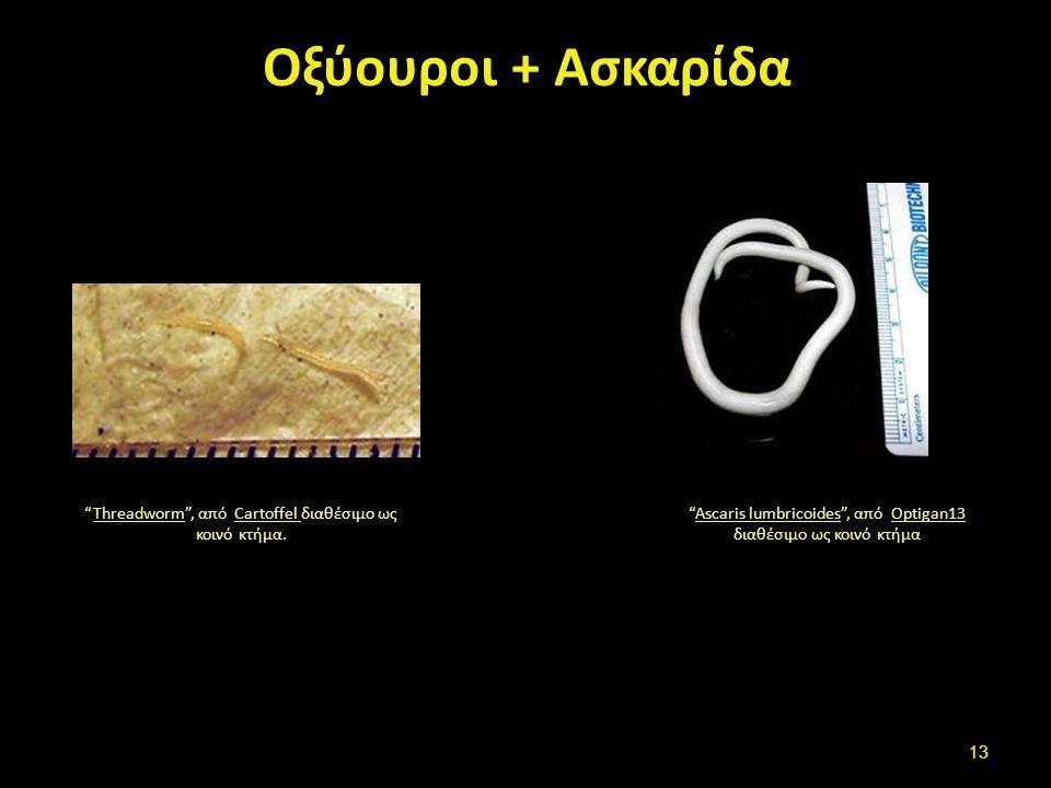 Παρουσία /Απουσία βλέννας-αίματος (1 από 2)