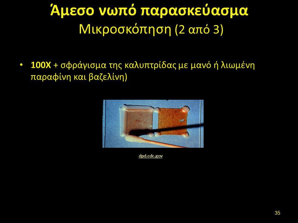 Άμεσο νωπό παρασκεύασμα Μικροσκόπηση (3 από 3)