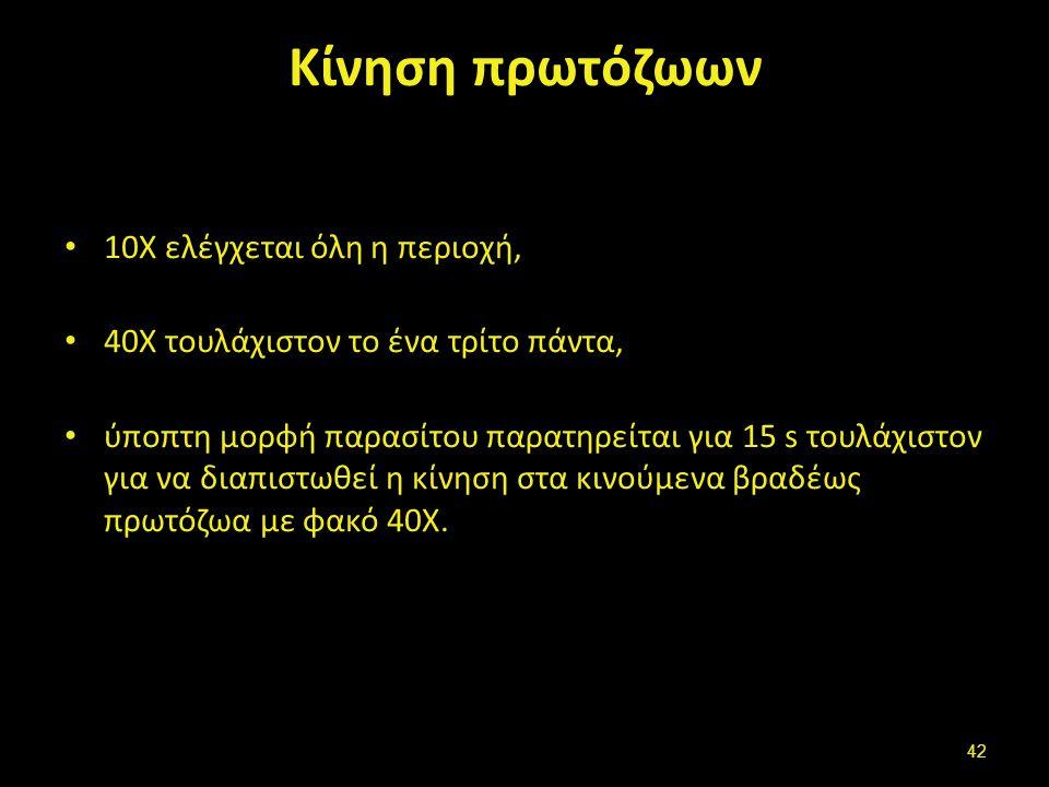 Τροφοζωίτες αμοιβάδας(Α)-λάμβλιας(F)- βαλαντίδιο(C)