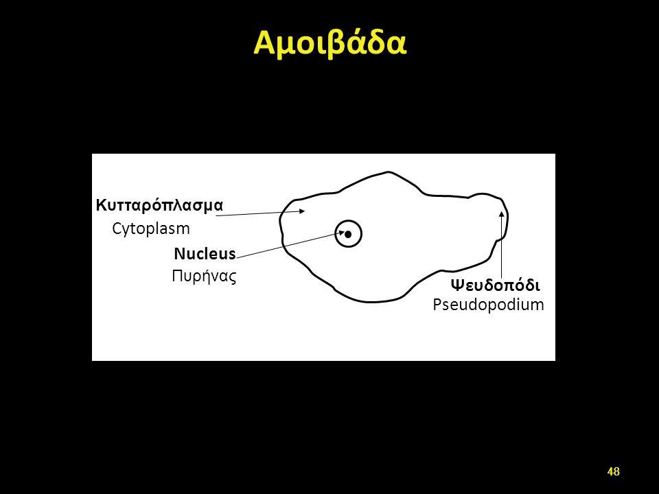 Τροφοζωίτης ιστολυτικής αμοιβάδας (E.histolytica)