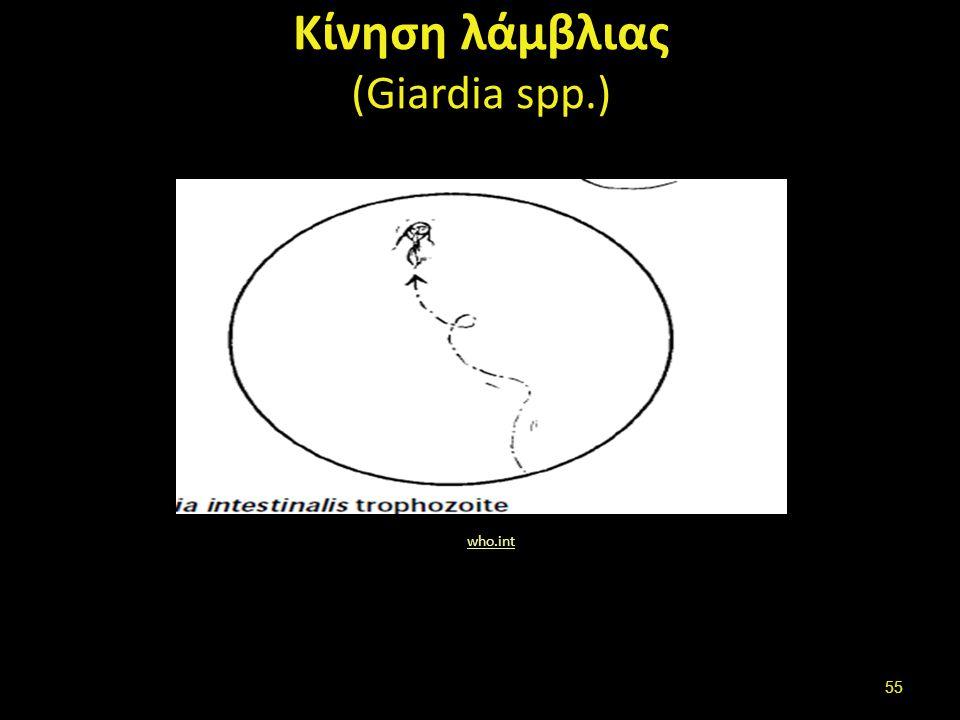 Τροφοζωίτης λάμβλιας (Giardia spp.-μαστίγια)