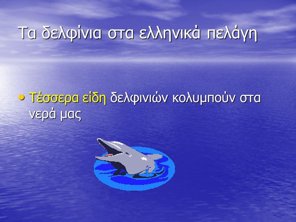 Τα δελφίνια στα ελληνικά πελάγη