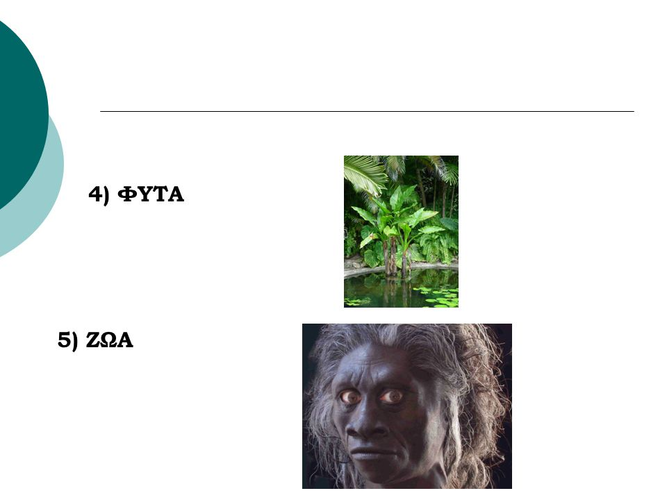 4) ΦΥΤΑ 5) ΖΩΑ