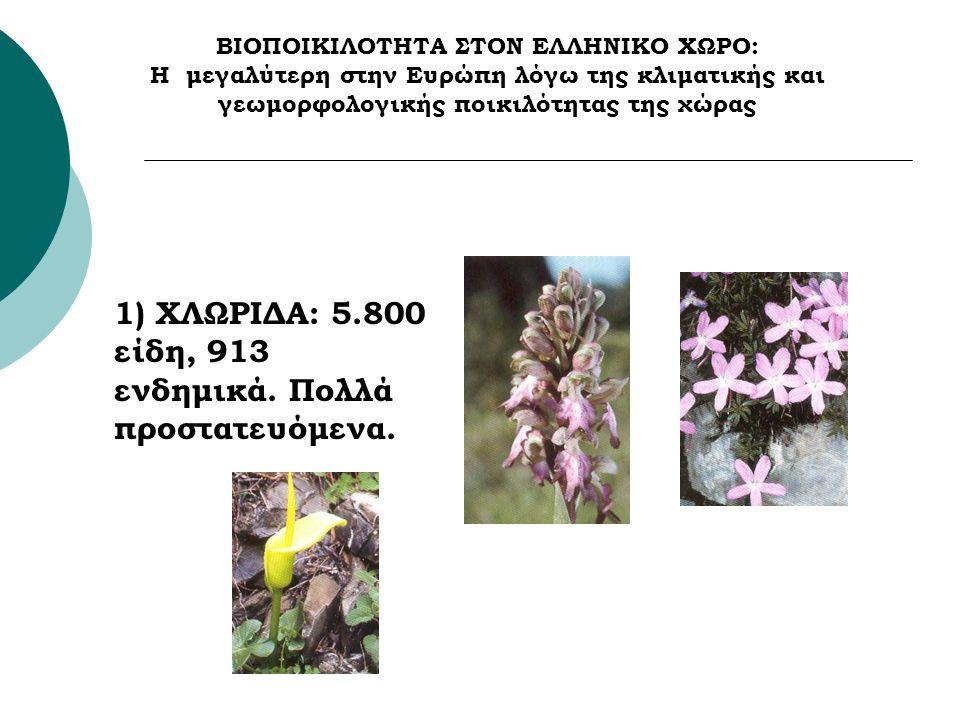 1) ΧΛΩΡΙΔΑ: 5.800 είδη, 913 ενδημικά. Πολλά προστατευόμενα.