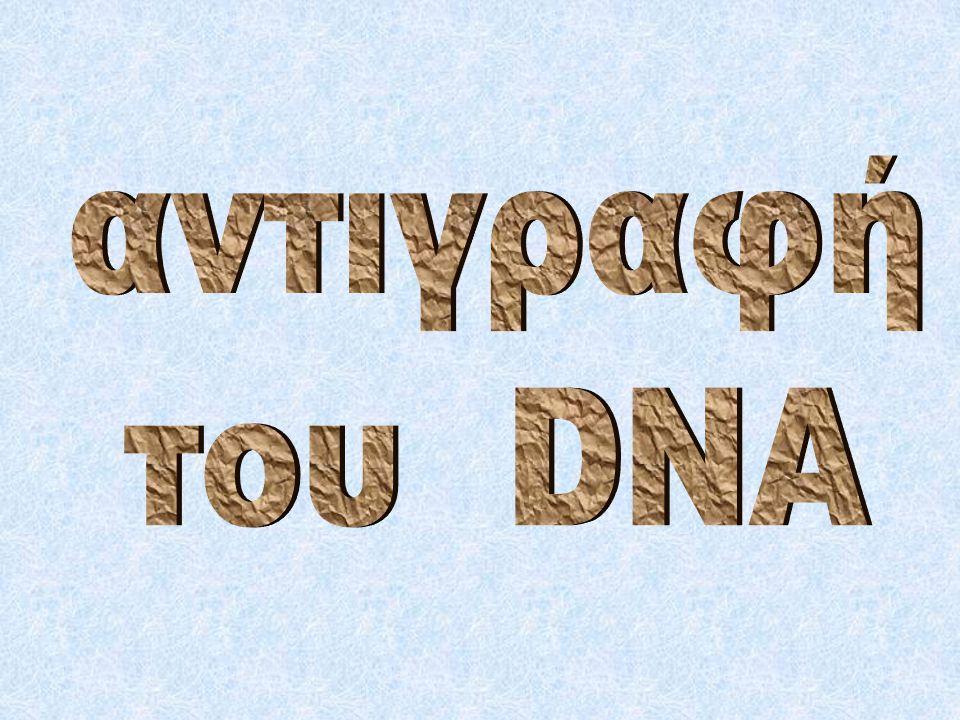 αντιγραφή του DNA