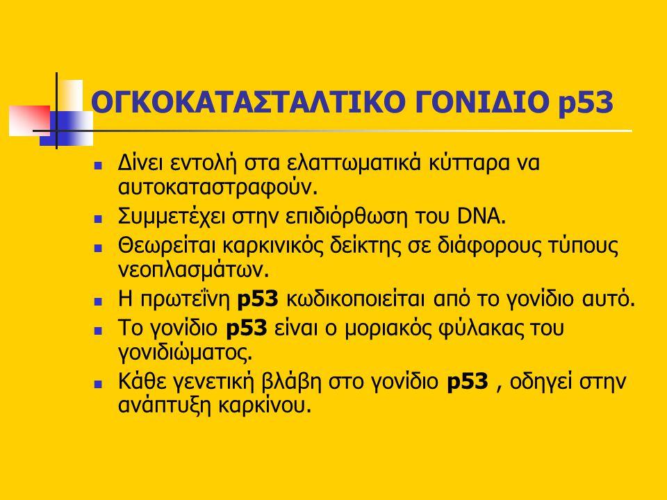 ΟΓΚΟΚΑΤΑΣΤΑΛΤΙΚO ΓΟΝΙΔΙΟ p53
