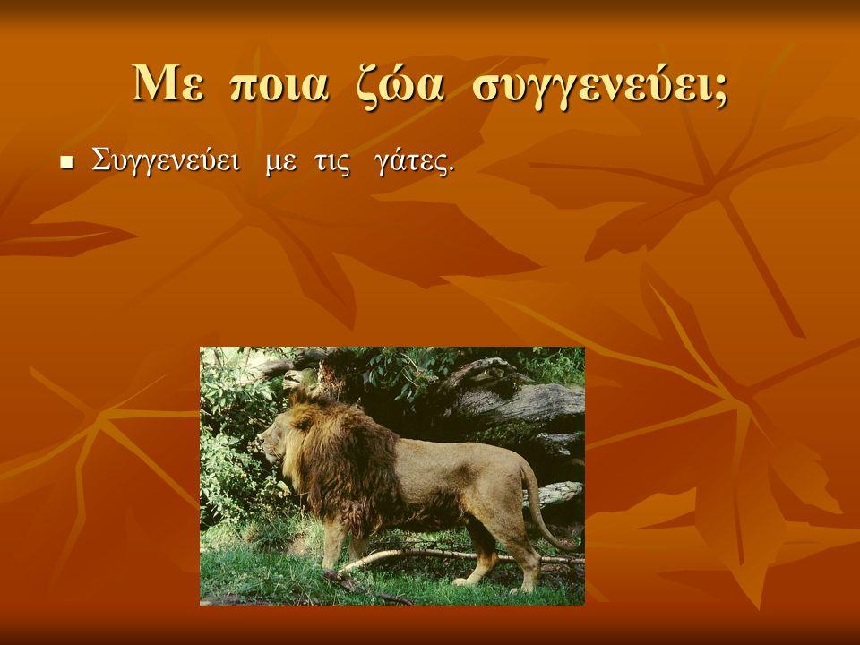 Με ποια ζώα συγγενεύει;