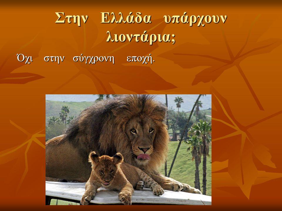 Στην Ελλάδα υπάρχουν λιοντάρια;