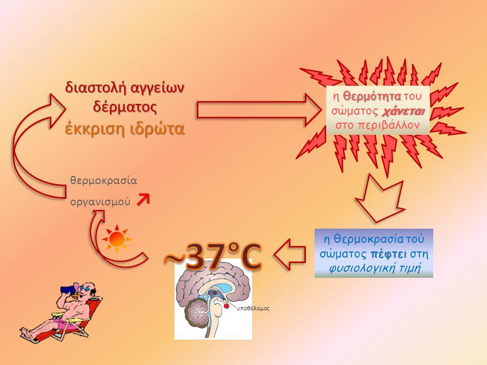37°C έκκριση ιδρώτα διαστολή αγγείων δέρματος