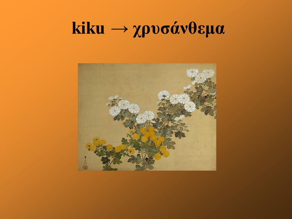 kiku → χρυσάνθεμα