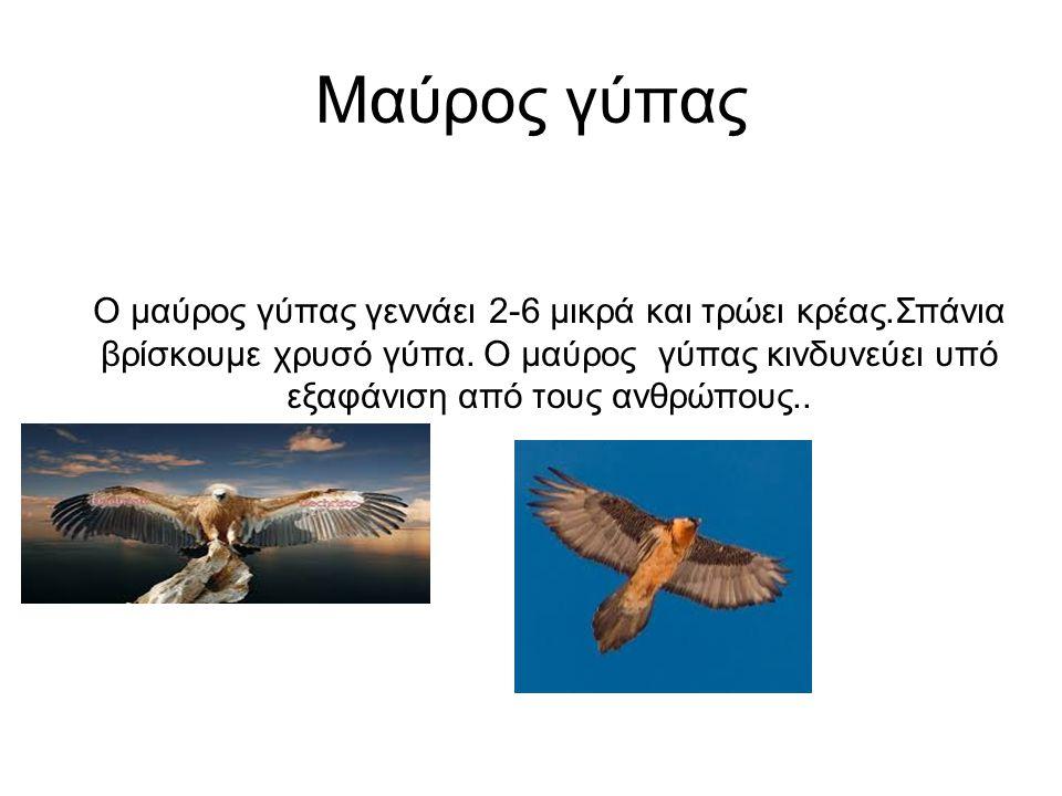 Μαύρος γύπας