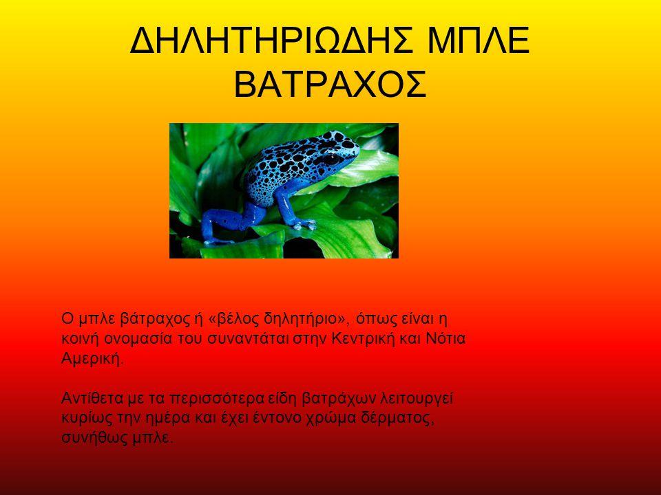 ΔΗΛΗΤΗΡΙΩΔΗΣ ΜΠΛΕ ΒΑΤΡΑΧΟΣ