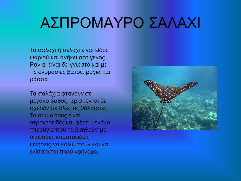 ΑΣΠΡΟΜΑΥΡΟ ΣΑΛΑΧΙ