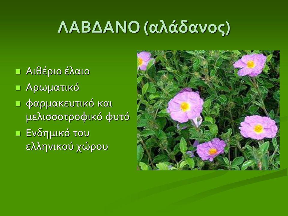 ΛΑΒΔΑΝΟ (αλάδανος) Αιθέριο έλαιο Αρωματικό