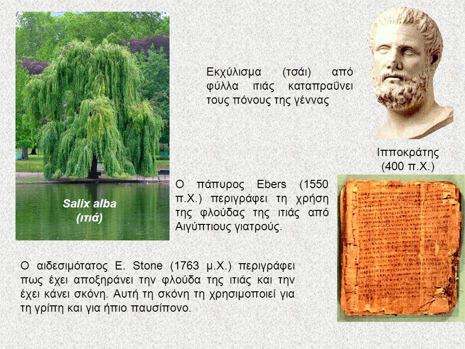 Ιπποκράτης (400 π.Χ.) Εκχύλισμα (τσάι) από φύλλα ιτιάς καταπραΰνει τους πόνους της γέννας. Salix alba.