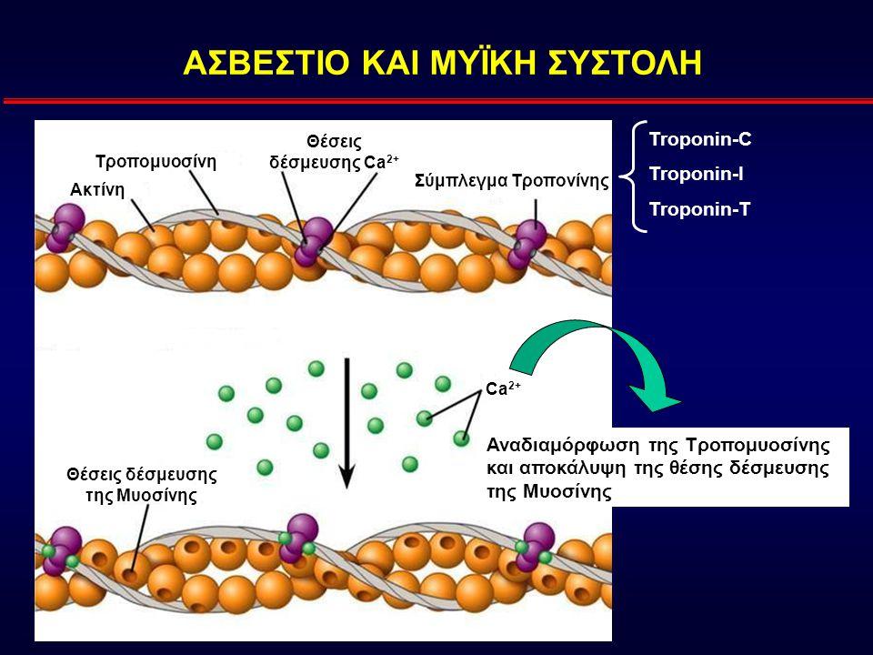 ΑΣΒΕΣΤΙΟ ΚΑΙ ΜΥΪΚΗ ΣΥΣΤΟΛΗ Θέσεις δέσμευσης της Μυοσίνης
