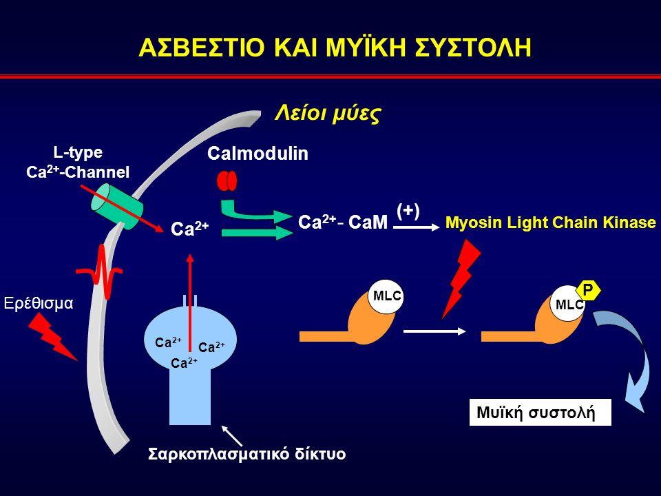 ΑΣΒΕΣΤΙΟ ΚΑΙ ΜΥΪΚΗ ΣΥΣΤΟΛΗ Myosin Light Chain Kinase
