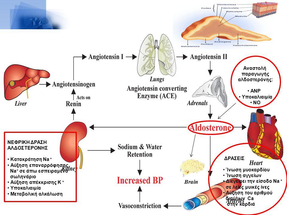 Brain Aναστολή παραγωγής αλδοστερόνης: ANP Υποκαλιαιμία NO