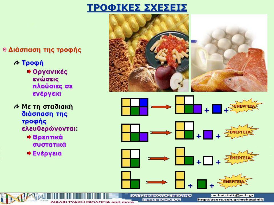ΤΡΟΦΙΚΕΣ ΣΧΕΣΕΙΣ + + + + + + + + Διάσπαση της τροφής Τροφή