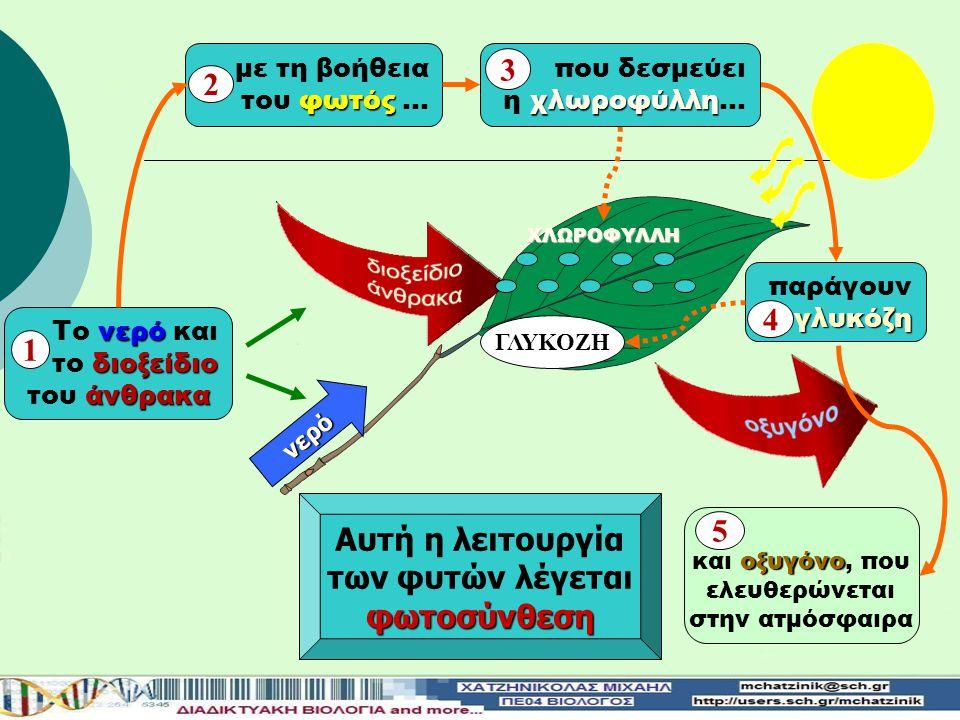 3 2 4 1 Αυτή η λειτουργία 5 των φυτών λέγεται φωτοσύνθεση