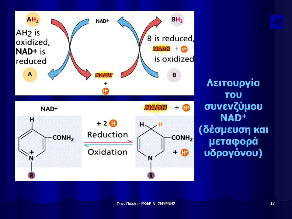 Λειτουργία του συνενζύμου NAD+ (δέσμευση και μεταφορά υδρογόνου)