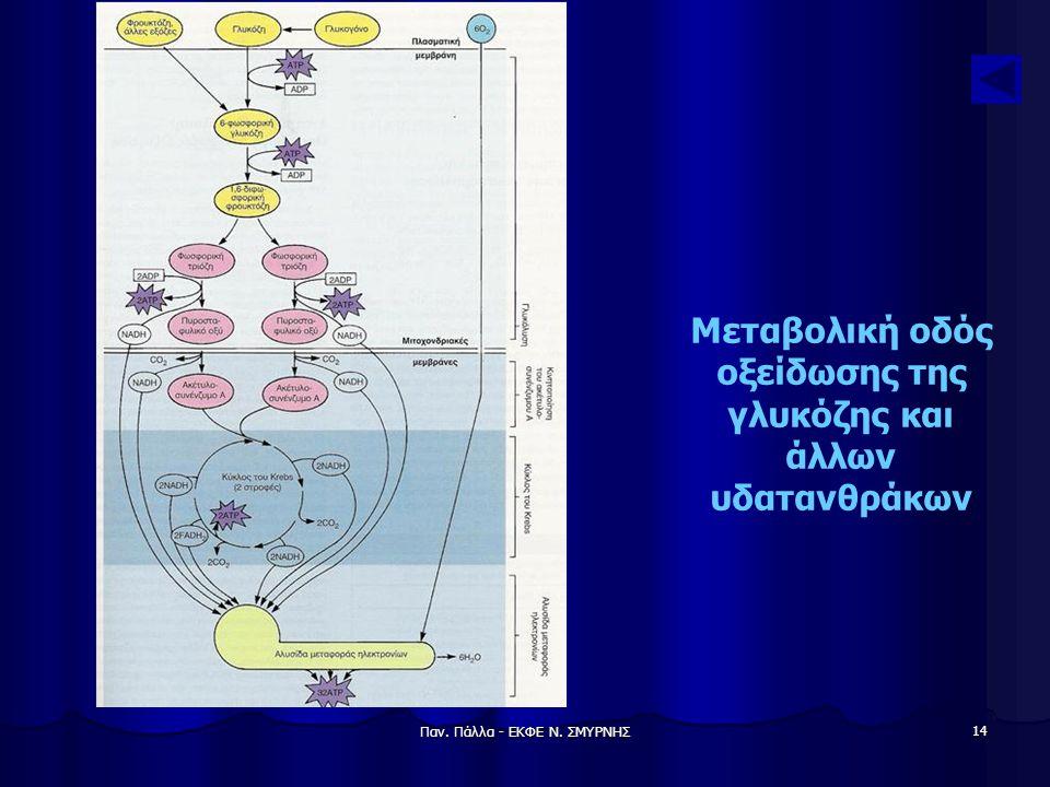 Μεταβολική οδός οξείδωσης της γλυκόζης και άλλων υδατανθράκων