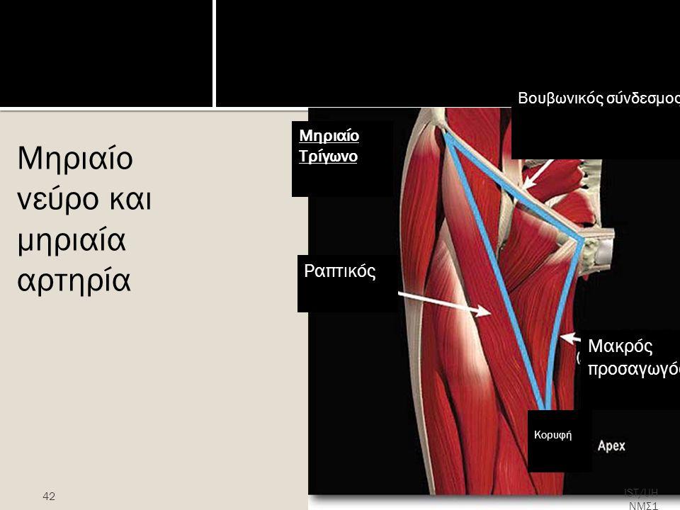Μηριαίο νεύρο και μηριαία αρτηρία