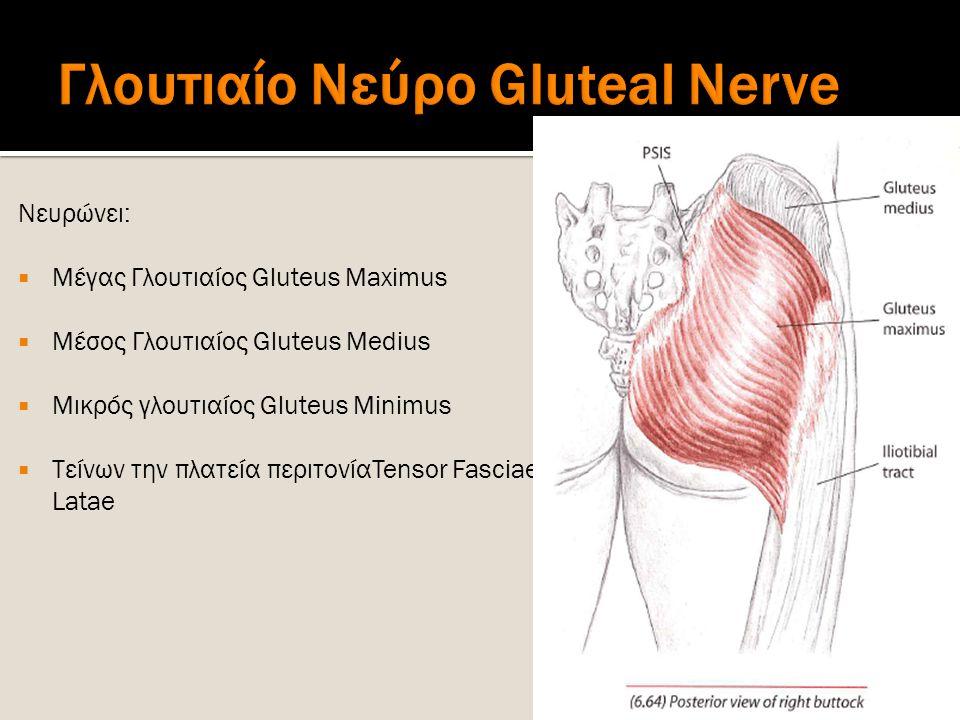 Γλουτιαίο Νεύρο Gluteal Nerve