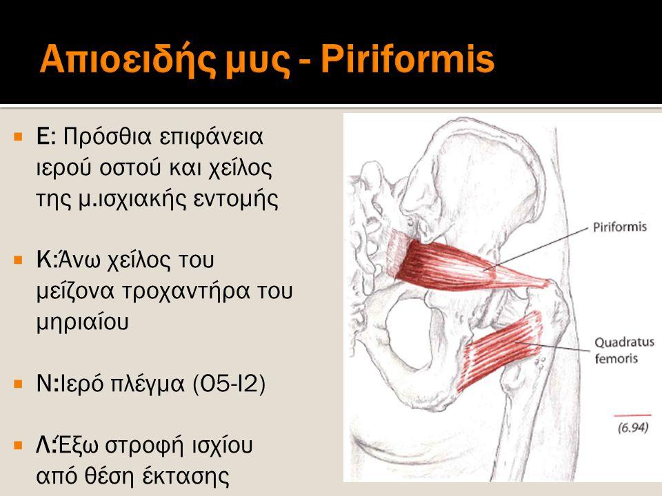 Απιοειδής μυς - Piriformis