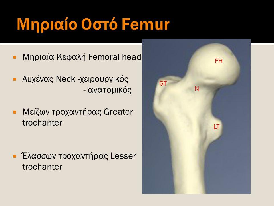 Μηριαίο Οστό Femur Μηριαία Κεφαλή Femoral head