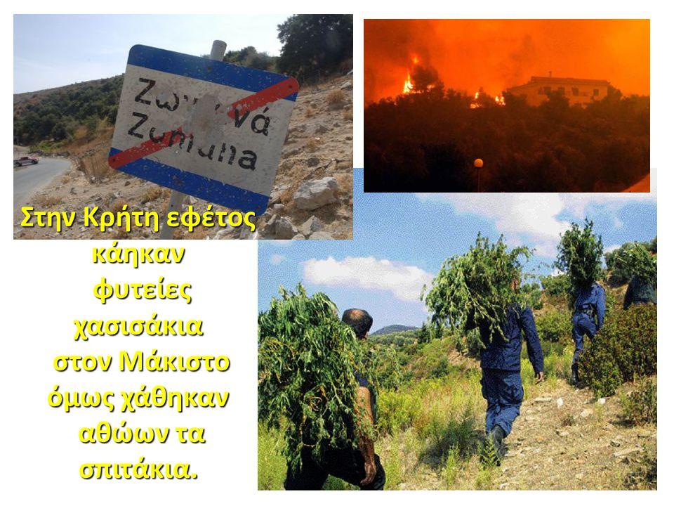 Στην Κρήτη εφέτος κάηκαν στον Μάκιστο όμως χάθηκαν