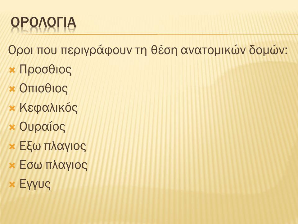 Ορολογια Οροι που περιγράφουν τη θέση ανατομικών δομών: Προσθιος