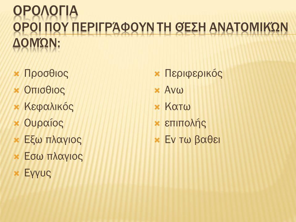 Ορολογια Οροι που περιγράφουν τη θέση ανατομικών δομών: