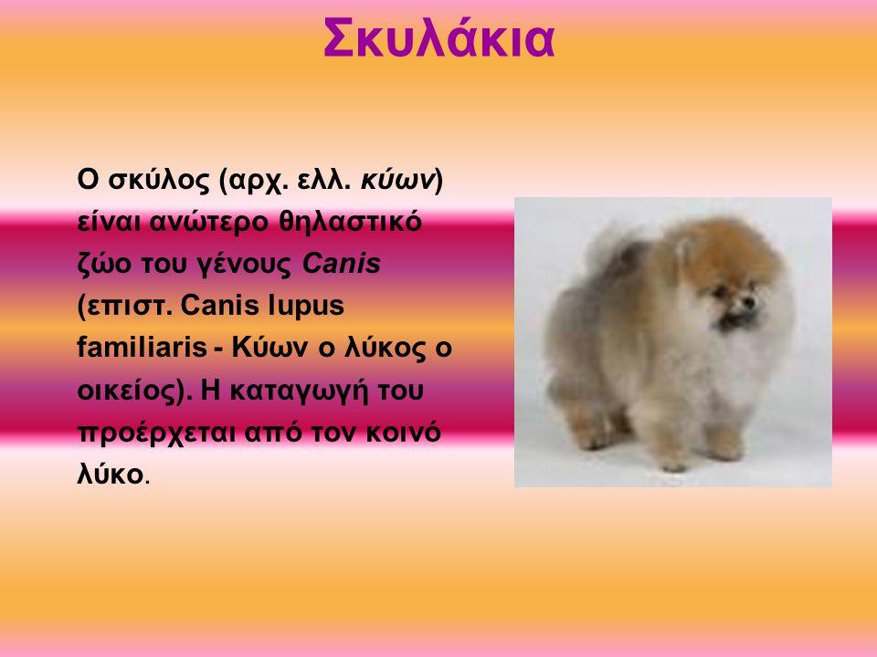 Σκυλάκια O σκύλος (αρχ. ελλ. κύων) είναι ανώτερο θηλαστικό