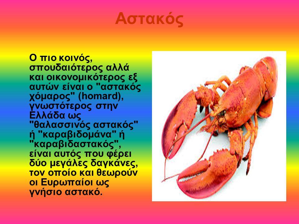 Αστακός