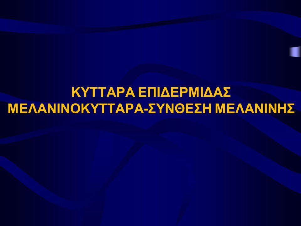 ΚΥΤΤΑΡΑ ΕΠΙΔΕΡΜΙΔΑΣ ΜΕΛΑΝΙΝΟΚΥΤΤΑΡΑ-ΣΥΝΘΕΣΗ ΜΕΛΑΝΙΝΗΣ