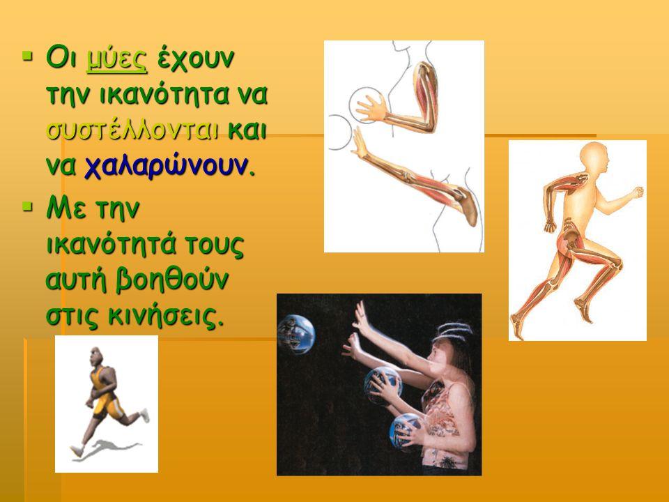 Οι μύες έχουν την ικανότητα να συστέλλονται και να χαλαρώνουν.
