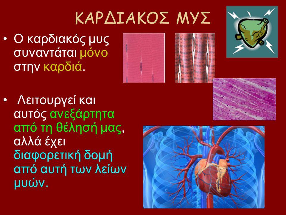 ΚΑΡΔΙΑΚΟΣ ΜΥΣ Ο καρδιακός μυς συναντάται μόνο στην καρδιά.