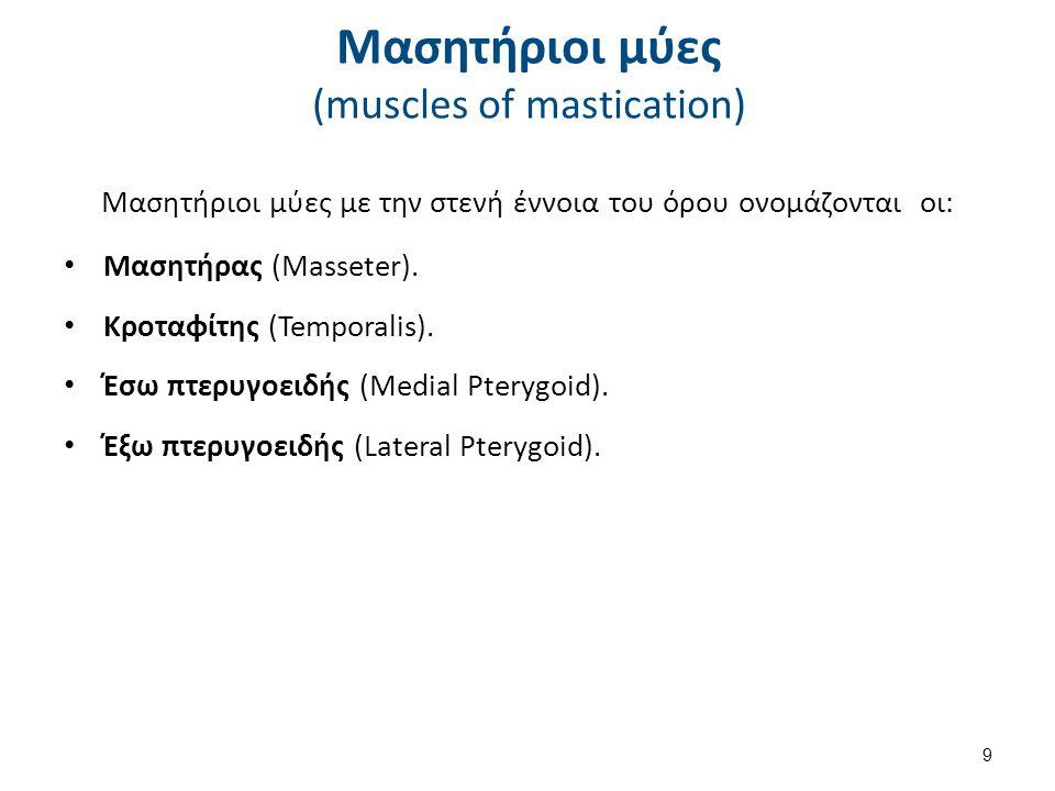 Μασητήρας μυς (masseter muscle) 1/3