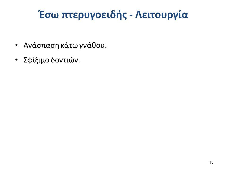 Έξω Πτερυγοειδής (lateral pterygoid) 1/2
