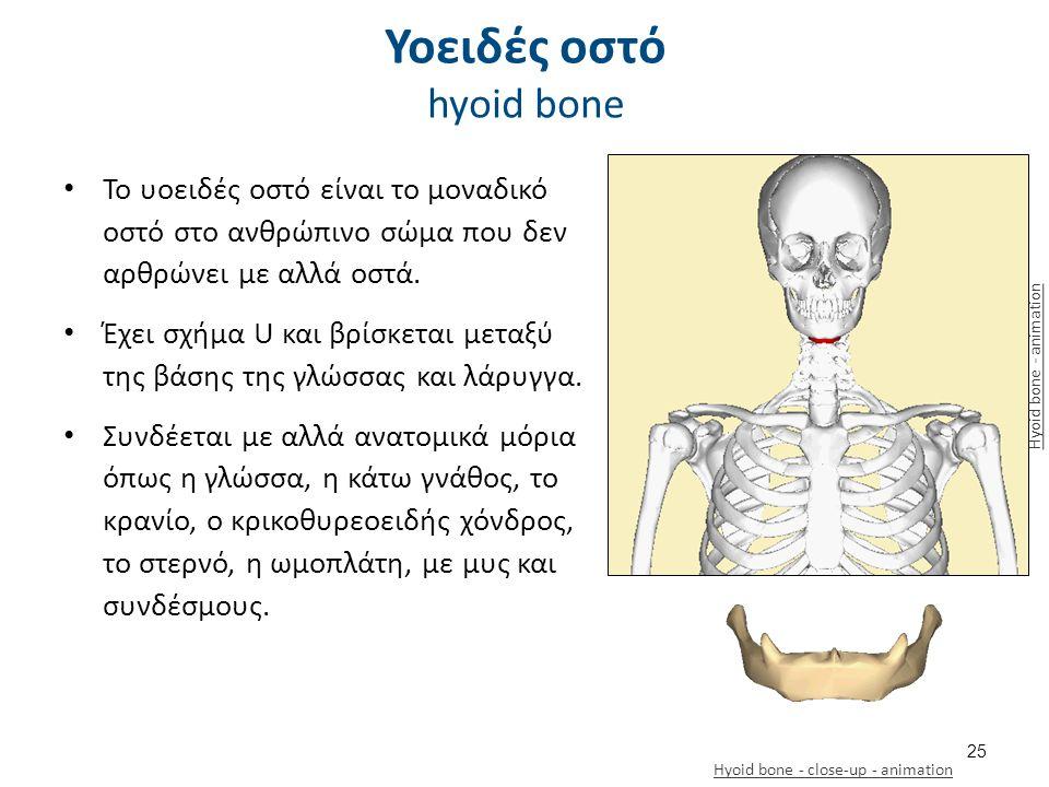 Οι άνω του υοειδούς μυς (κατασπώντες)