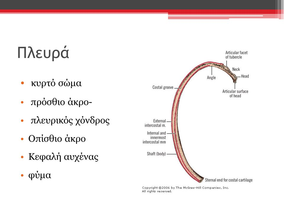 Πλευρά κυρτό σώμα πρόσθιο άκρο- πλευρικός χόνδρος Οπίσθιο άκρο