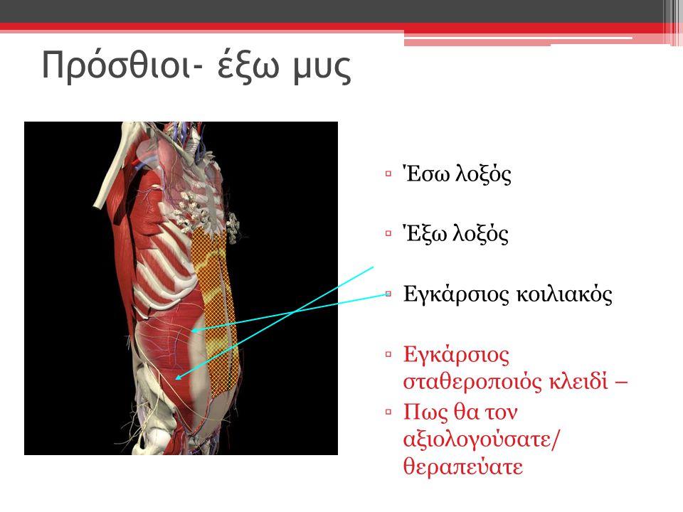 Πρόσθιοι- έξω μυς Έσω λοξός Έξω λοξός Εγκάρσιος κοιλιακός