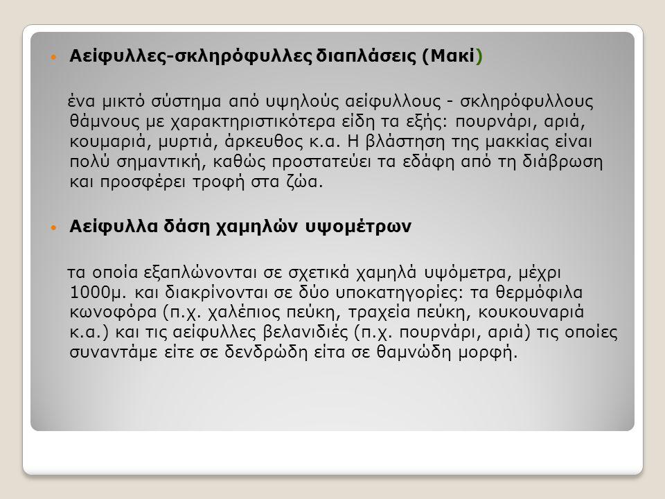 Αείφυλλες-σκληρόφυλλες διαπλάσεις (Μακί)