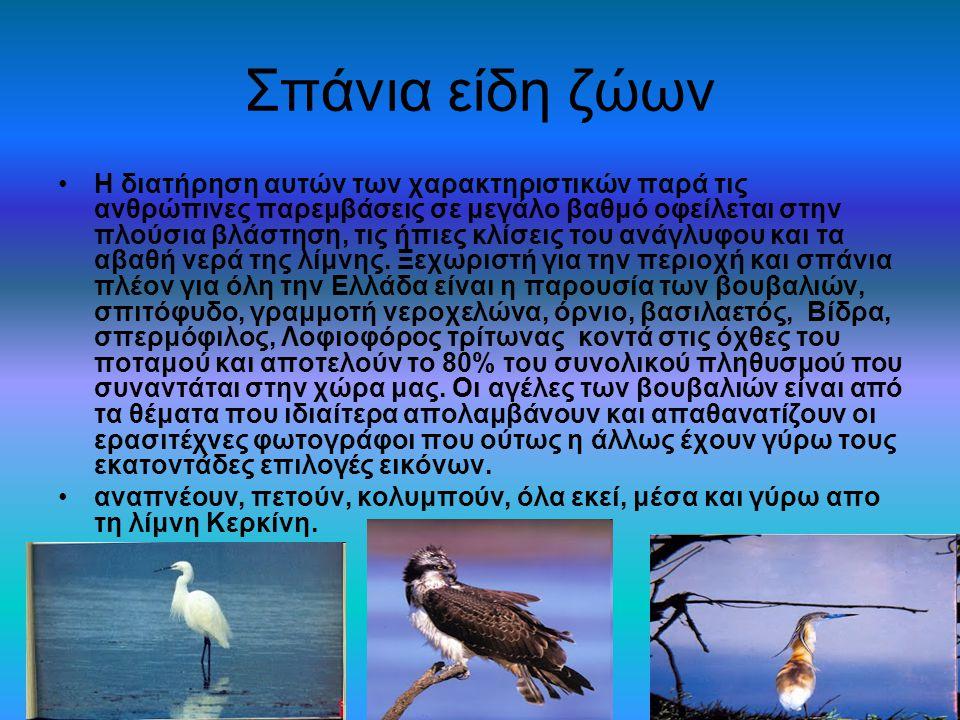 Σπάνια είδη ζώων